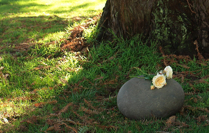 Survey respondents favor eco-friendly burial options